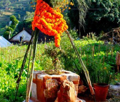 आज क्षीरसागरमा विष्णु ब्युँझने दिन अर्थात् हरिबोधिनी एकादशी : तुलसीको विवाह गरी मनाइँदै
